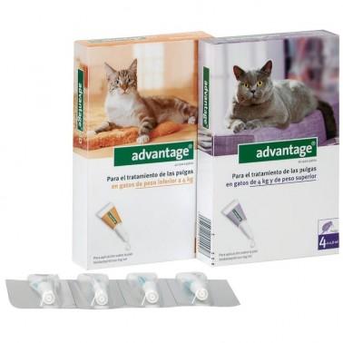 Advantage gatos 4 Pipetas desparasitar gatos